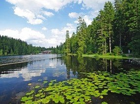 Single Parents on Holiday - The Bavarian Forest about Image 1