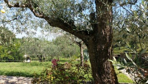 hotel la Macchia in Umbria, activity holiday in Italy, single parent activity holiday in Umbria