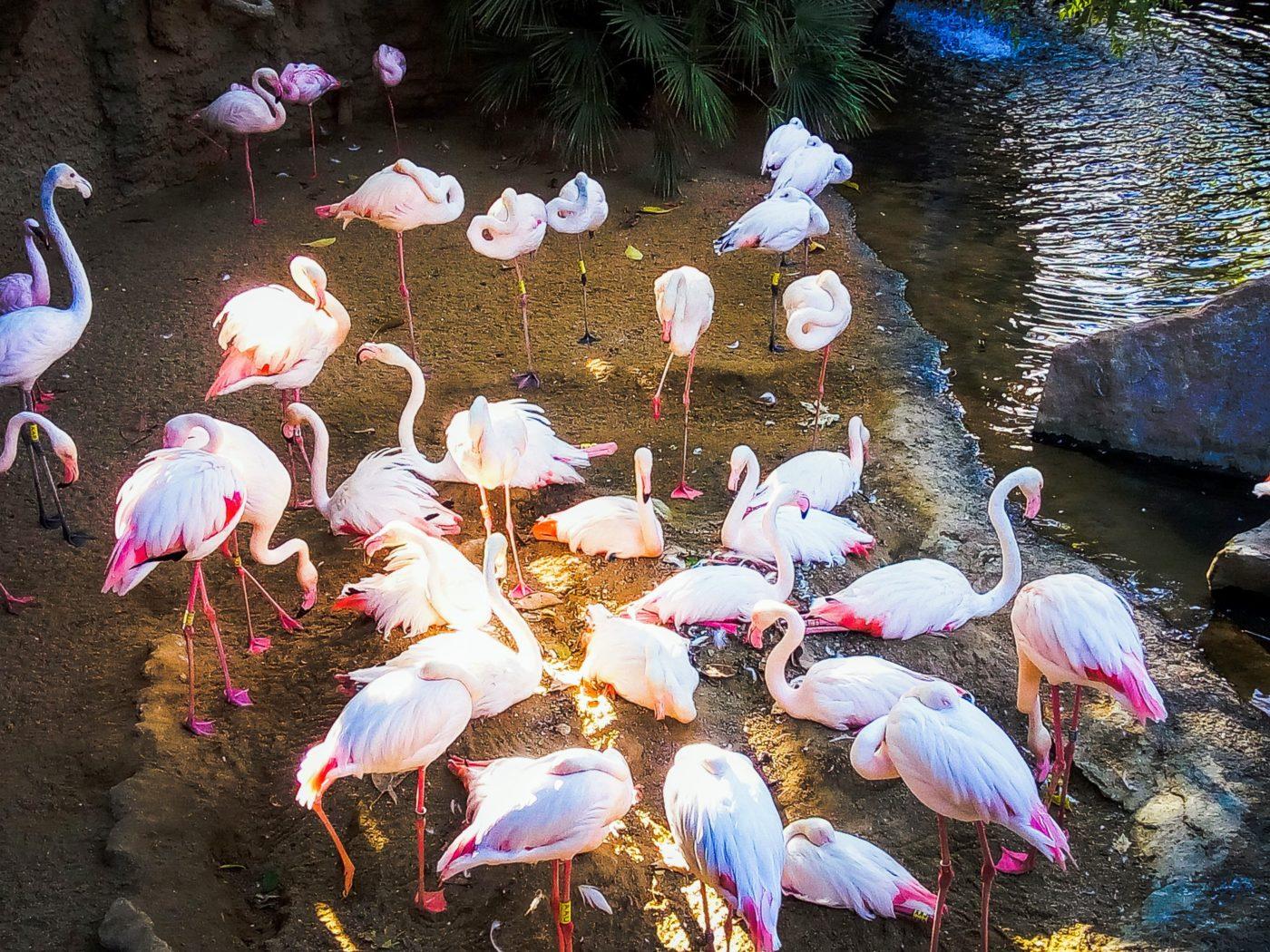 Flamingos in Bioparc Fuengirola on the Costa del Sol