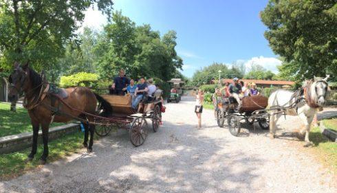 horse drawn carriage ride around the Gelindo dei Magredi farm