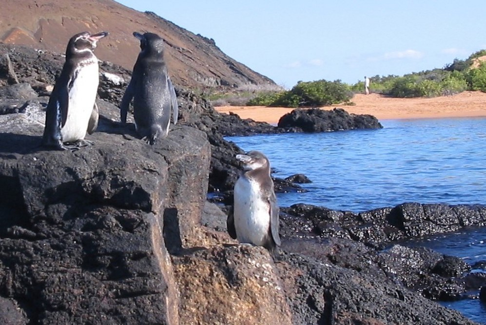 Galapagos islands facts - penguins on rocks above sea