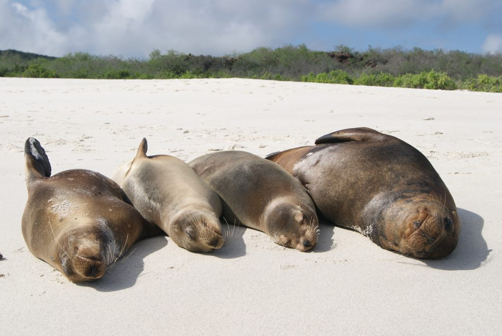 Galapagos islands facts - sea lions on beach