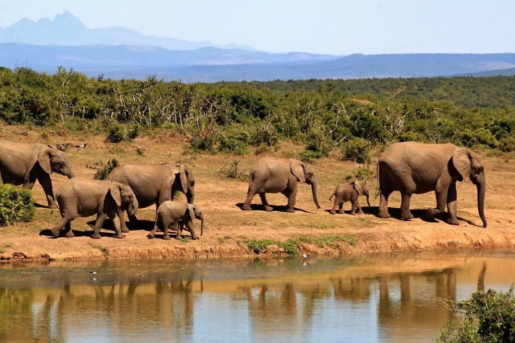 African safari with kids - elephants