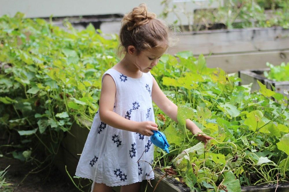 vegetable garden - young girl gardening