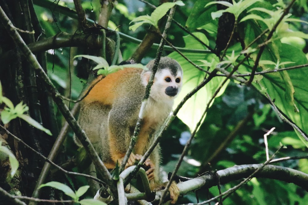 best hiking trails in South America - monkey in the jungle