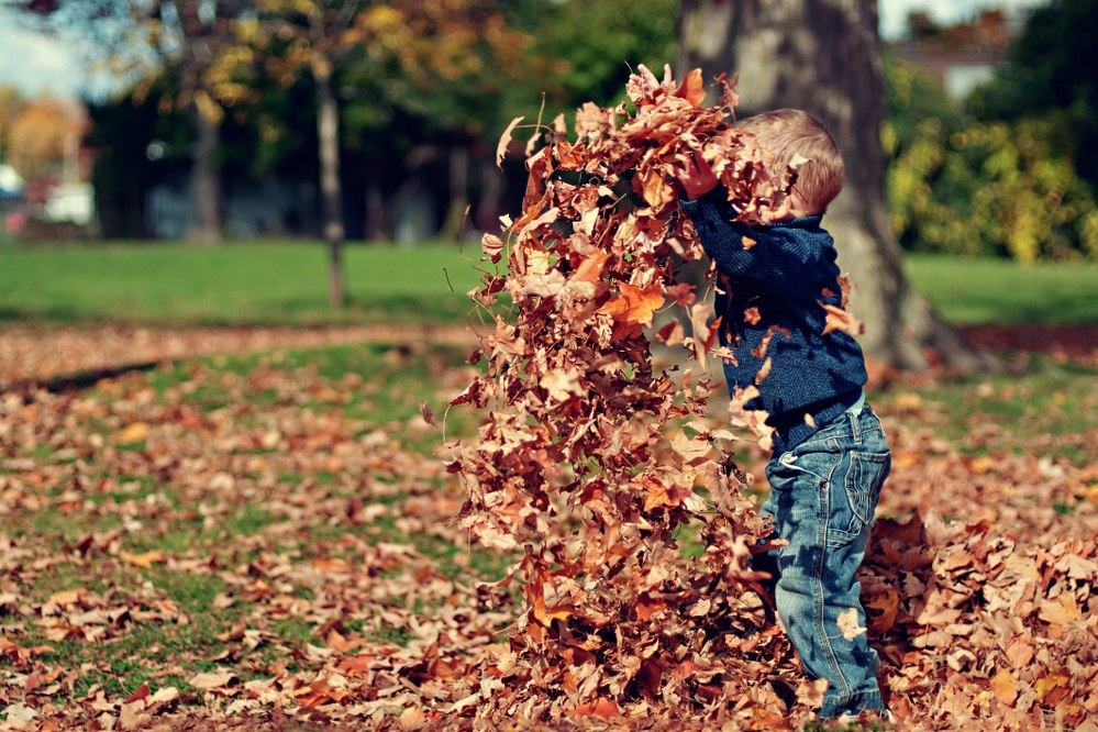 little boy playing with leaves in autumn garden