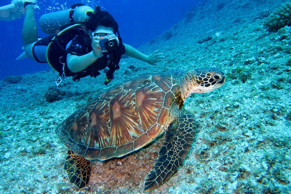 dream holiday - diving Great Barrier Reef