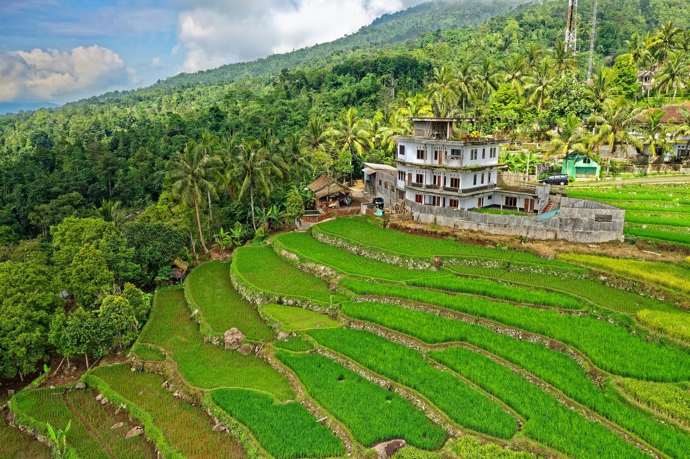 dream holiday - rice fields in Indonesia