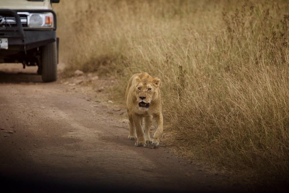 off the beaten track holidays for single parents - African Safari Serengeti Tanzania