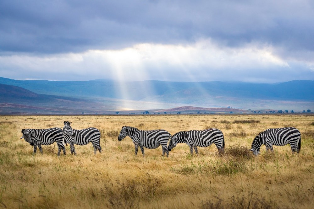 single parent holiday ideas off the beaten track - safari in Tanzania