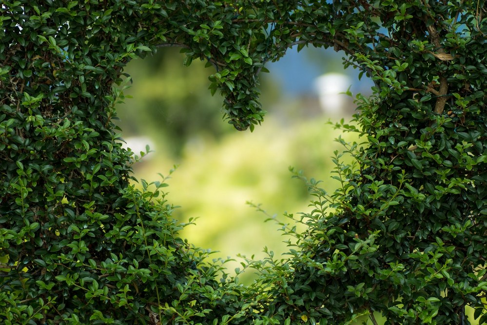 heart shape in a hedge