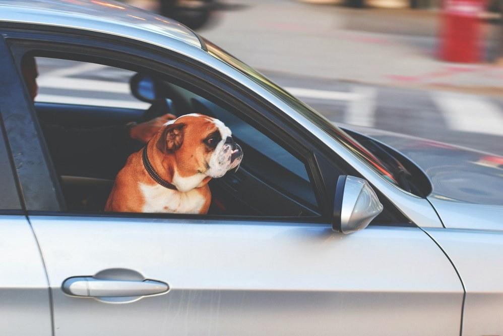 cog on road trip