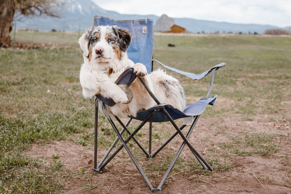dog relaxing in camping chair