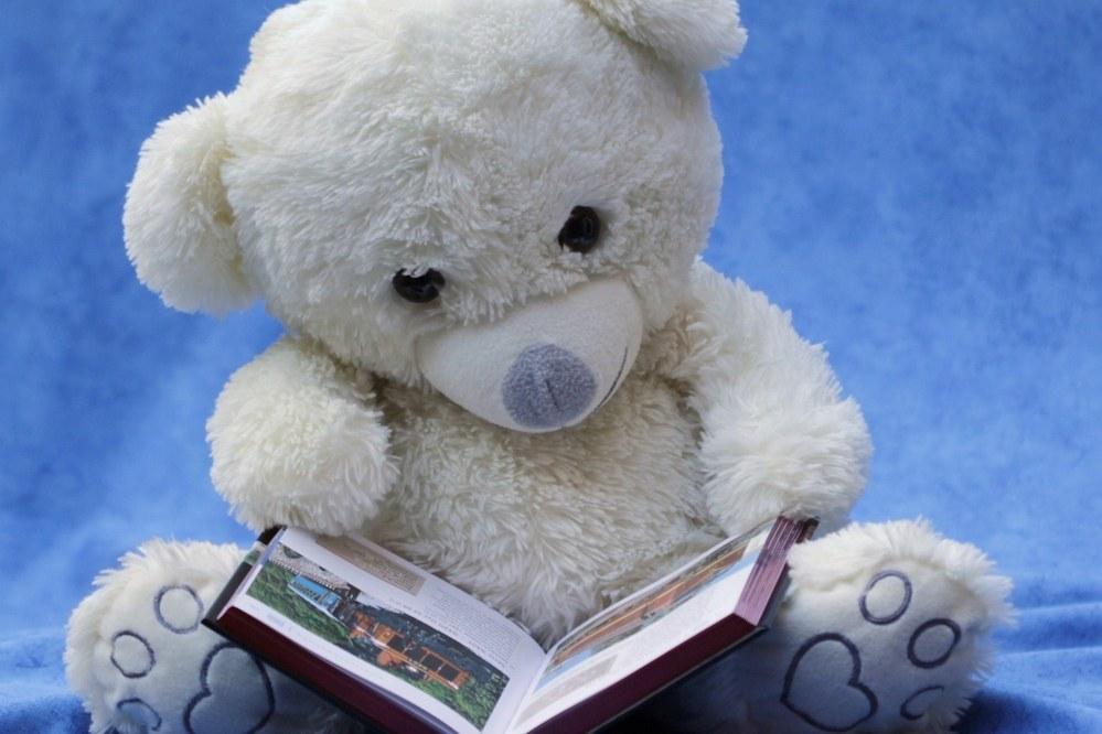 teddy reading book